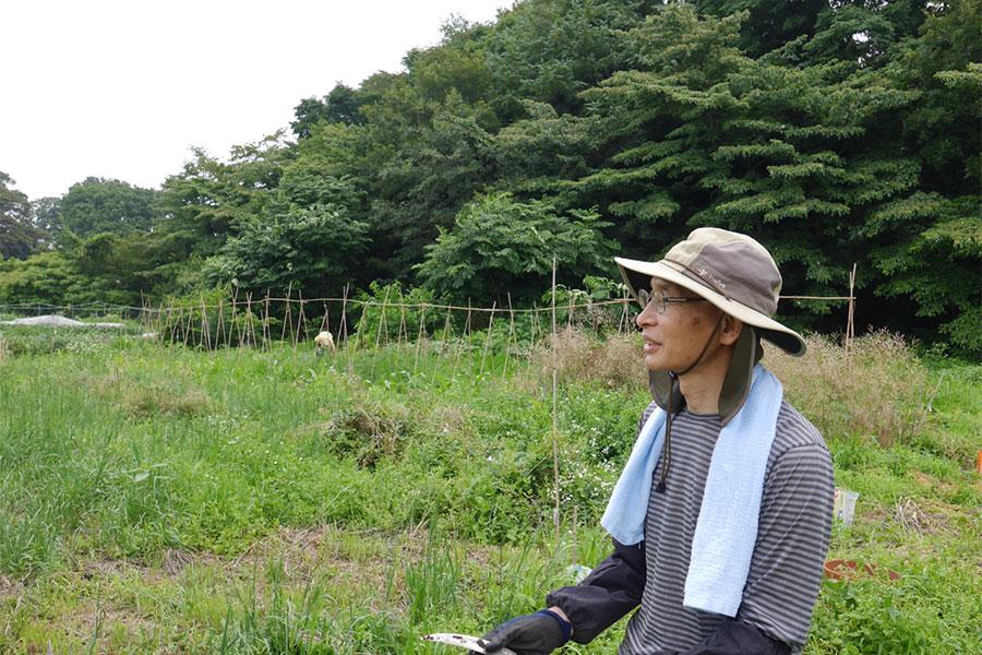 自然農の畑