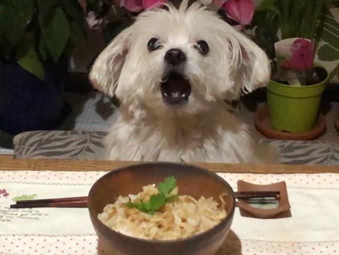 たけのこご飯、おいしいよ!