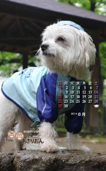 2014_06_calendar_Android