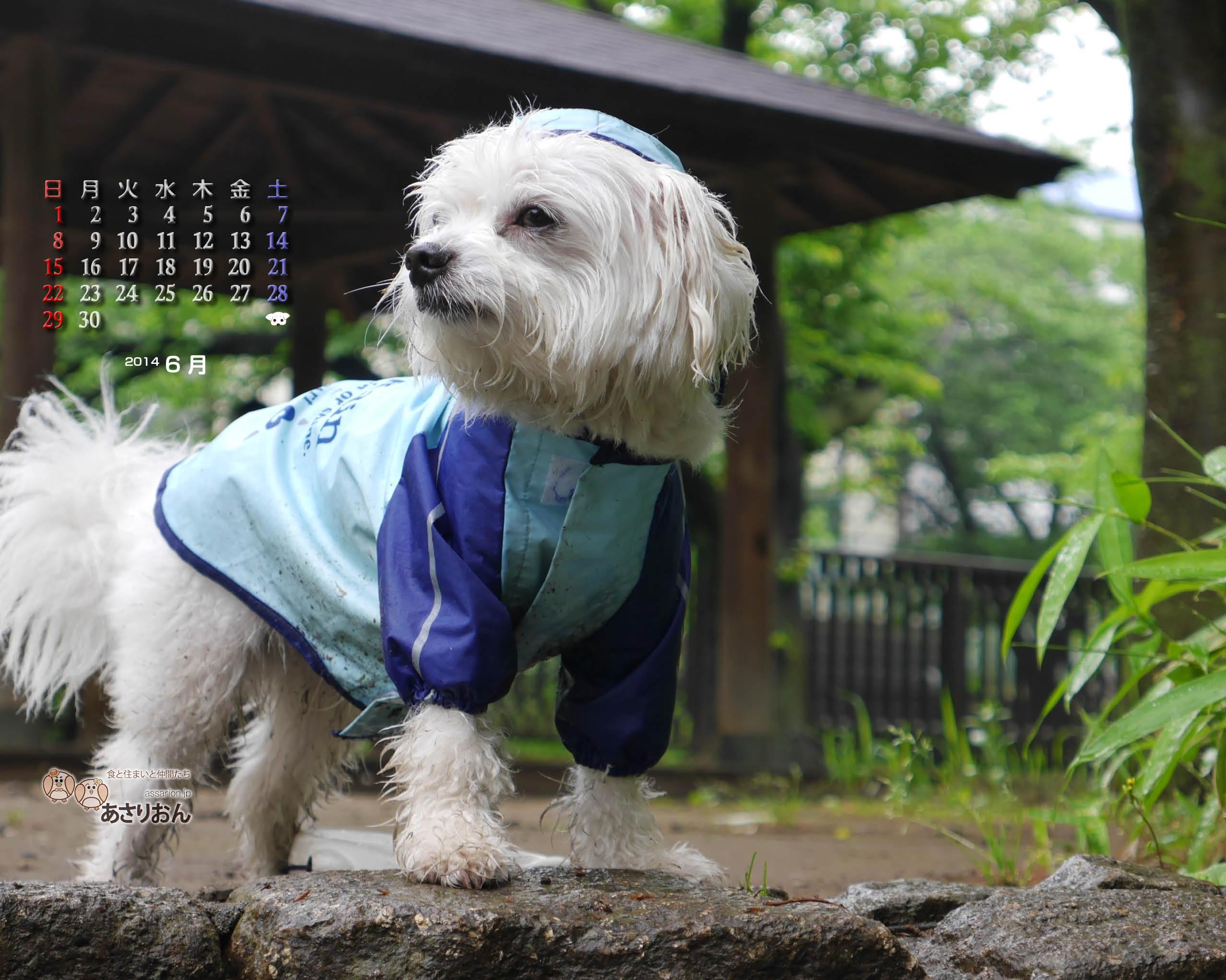 2014_06_calendar_l