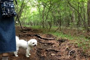 清里の森とまる